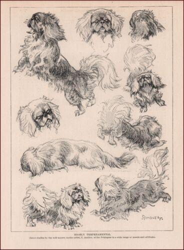 PEKINGESE Dog in Various Poses by C. Ambler, vintage print, authentic 1935