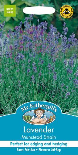 150 Graines Monsieur Fothergills-paquet illustré-fines herbes-Lavande souche Munstead