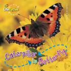 Caterpillar to Butterfly by Camilla De la Bedoyere (Paperback, 2010)