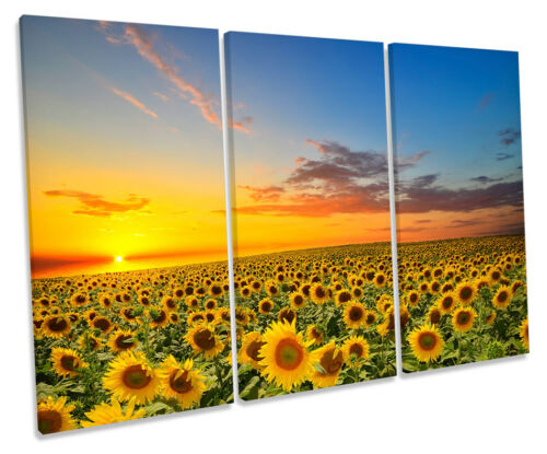 Sunset Sunflowers Floral CANVAS WALL ART TREBLE Box Frame Print