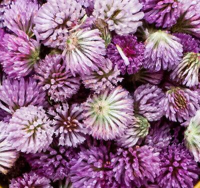 Graines De Trifolium Hybridum-schwedenklee bienenklee 20.000