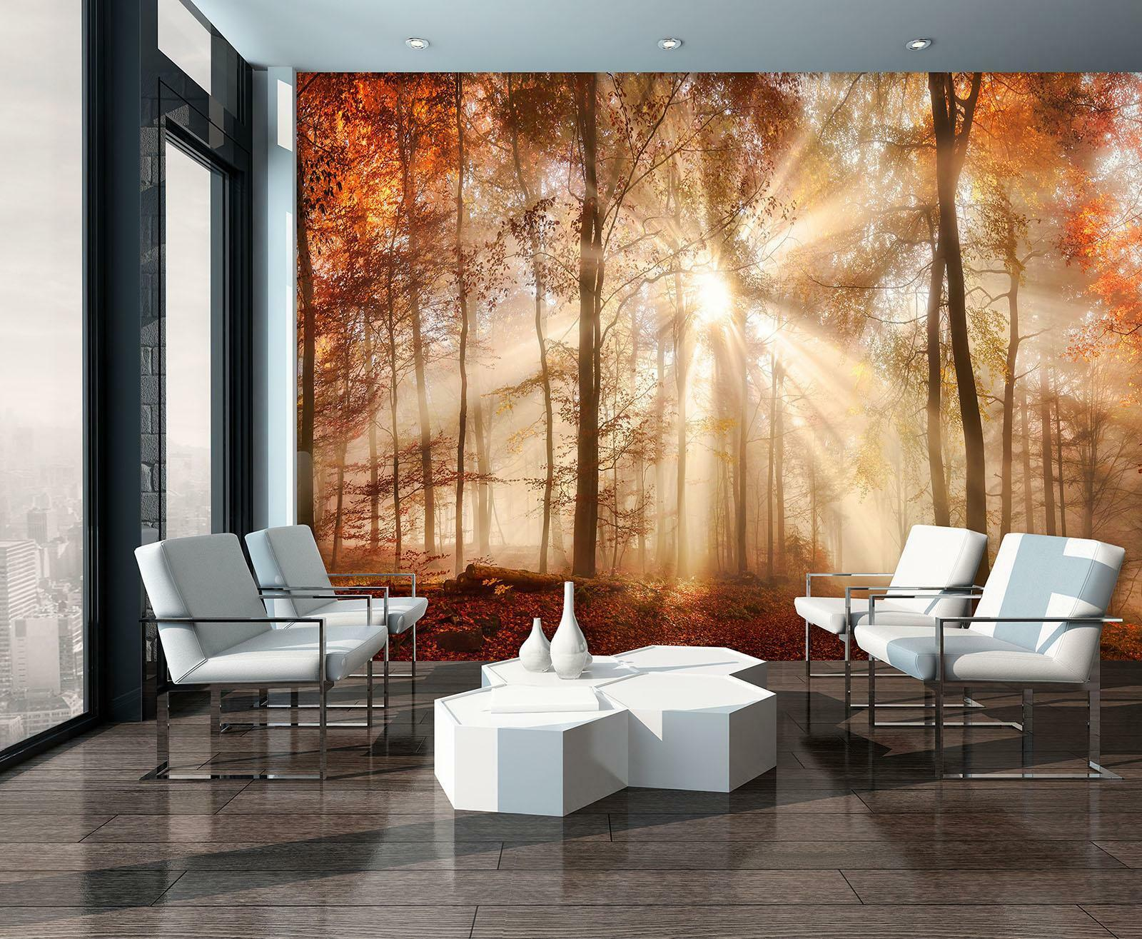 Photo Wallpaper Mural  10471_P Autumn Forest in the Sun nature landscape forest
