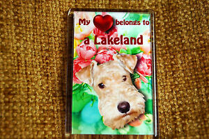 Lakeland-Terrier-Gift-Dog-Fridge-Magnet-77-x-51mm-Birthday-Gift-Stocking-Filler