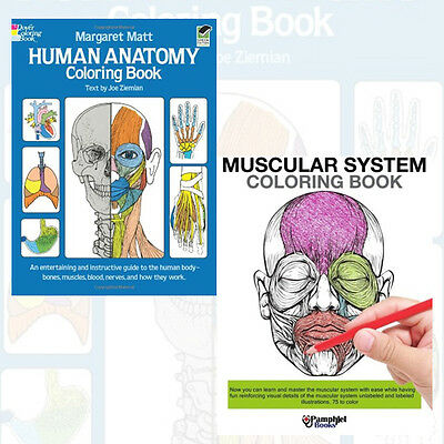 Human Anatomy Colouring Books Collection 2 Books(Muscular System ...