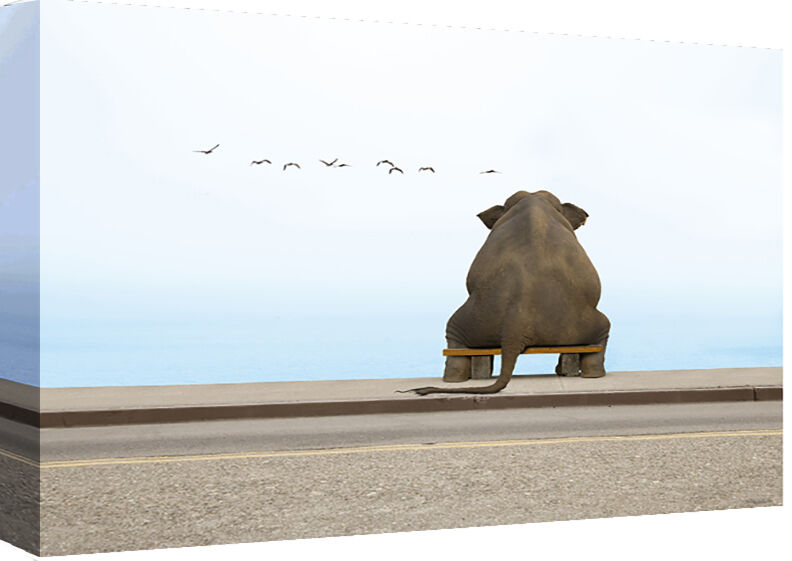 Elephant Sitting on Bench - Cotton Canvas Wall Art Picture Print- ALL GrößeS