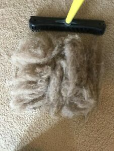 how to get rid of dog hair on carpet