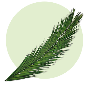 palmzweige palmblatt naturaleza palmenblätter Hoja de palmera conservado acercó