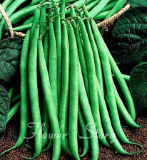 Tasty 20 Long Pole Bean Seeds Easy to Plant Non Gmo Heirloom  Vegetable