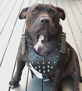 Dog-Harness-Leather-Collar-Leash-Set-For-Pitbull-Mastiff-26-034-33-034-Studded-Spiked