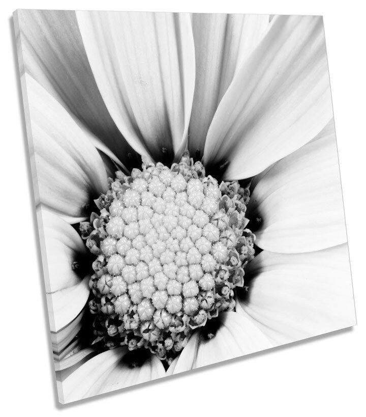 Floral Flower Closeup Petals SQUARE CANVAS Wand Kunst Boxed Framed