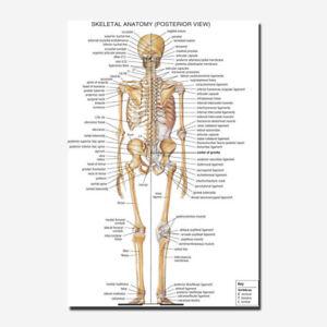 Poster For Anatomy Human Body Tutorials Map Silk Fabric Poster 13x20 24x36 Inch Ebay