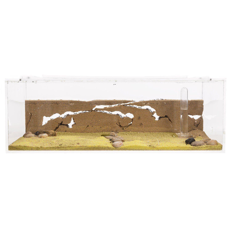 vendita calda SABBIA ANT Farm Farm Farm gree-formiautoium educativi per vivere FORMICHE  tutti i beni sono speciali