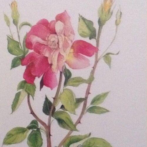 16 magnifiquement dessiné Qualité Fleur cartes vide à l/'intérieur pour toutes les occasions