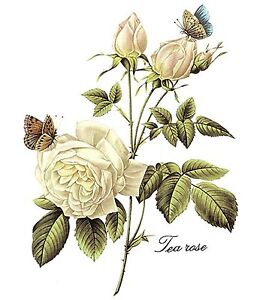 White-Tea-Rose-Butterfly-Bouquet-Flower-Select-Size-Waterslide-Ceramic-Decals-Bx