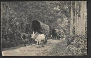 Ceylan-1915-carte-postale-Bullock-charrettes-utilise-pour-l-039-Australie-Brisbane-rouge-censeur