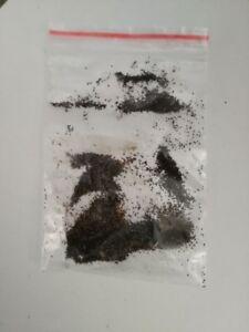 teloxis aristata SEMI TELOXIS ARISTATA DA COLTIVARE  Seamoss zeechium Seafoam
