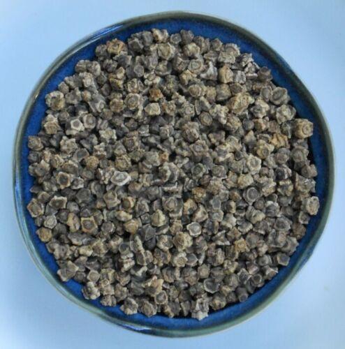 Golden Detroit Beets Seed 3.0gr to 10gr Heirloom Beet Root Vegetable Seeds