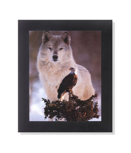American Bald Eagle Bird with Gray Wolf Photo Wall Picture Black Framed