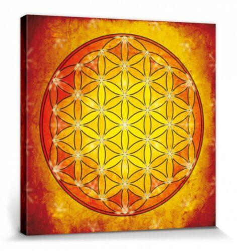 #75643 Blume Des Lebens Element Feuer Poster Leinwand-Druck 40x40cm Mandalas