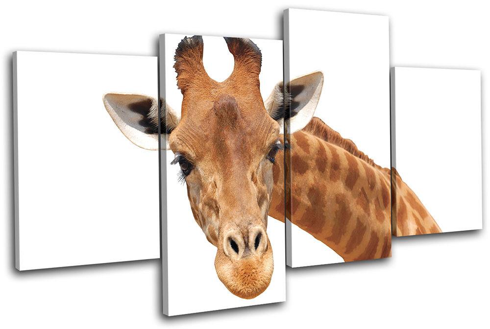 Giraffe Wild Animals MULTI LONA pa Foto rojo  arte Foto pa impresion 87127a