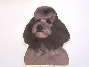 POODLE GRAY SILVER Dog Breed Double sided COLOR Decal Car Sticker NEW - Ventura, California, United States - POODLE GRAY SILVER Dog Breed Double sided COLOR Decal Car Sticker NEW - Ventura, California, United States