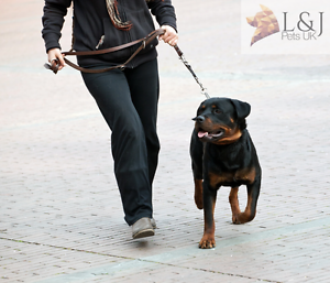 Heavy-Duty-Lead-Champion-Strong-Multi-Functional-Adjustable-Leather-Dog-Leads