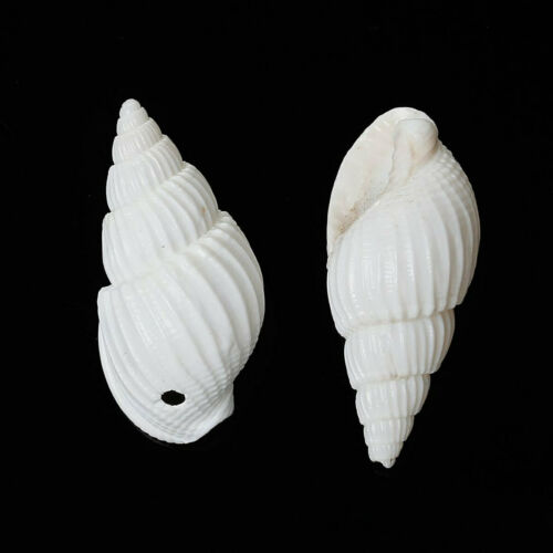 BD632 15 Shell Beads Great Beach Jewelry Item Natural Shells with Drilled Hole