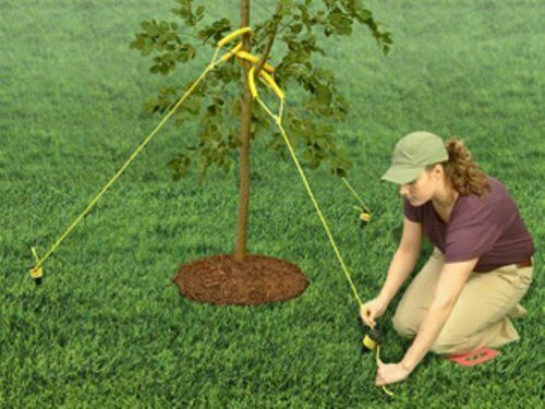 Tree Starter Kit Promotes Straight Tree Growth /& Prevent Root Damage 21Ft