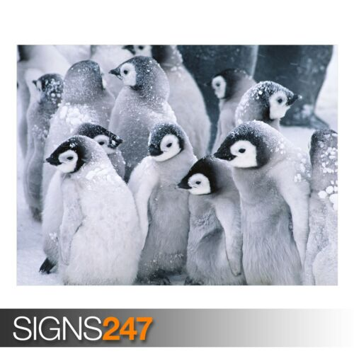 3528 CUTE ARCTIC PENGUINS Animal Poster Photo Poster Print Art * All Sizes