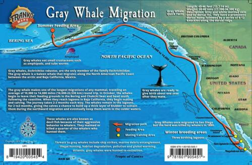 Gray Whale Migrations Pacific Ocean Illustrated Card