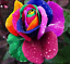 Semillas-rosas-disponible-en-9-tonos-diferentes-10-20-o-30-semillas miniatura 10