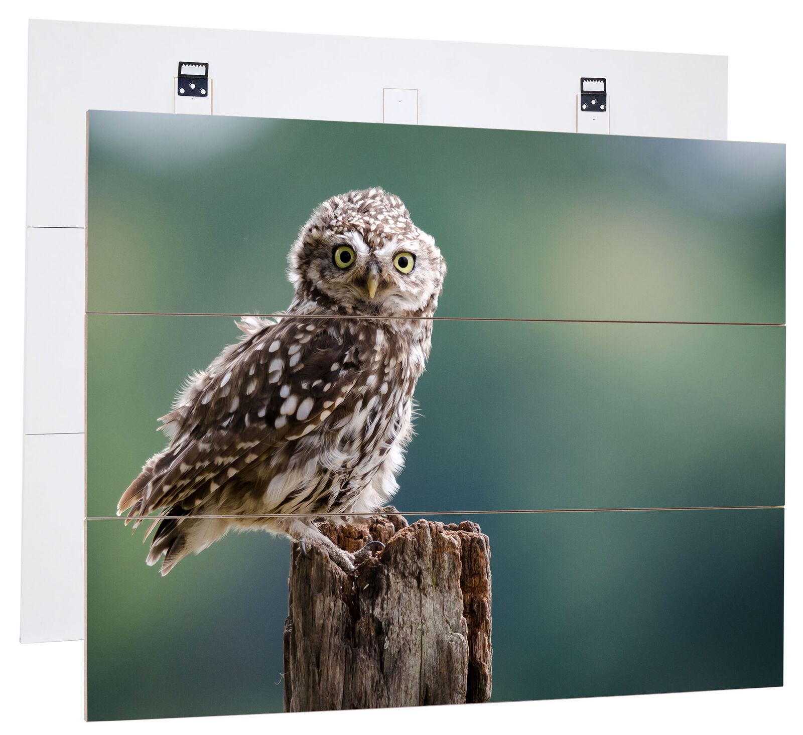 drôle Peu Owl-MDF bois Picture in boisen Look Wall Decoration