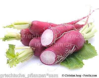Radieschen CHINA ROSE ** chin.Winter Rettich * 50 Samen