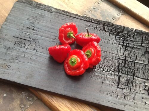 Rocotillo Squash Jamaican Champignon Red Hot Chili Pepper Seeds 25 pcs