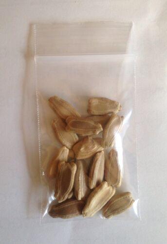 Doodhi লাউ Bangladeshi Seeds F1 KOCHI Bottle Gourd দুদি Pani Kodu পানি কদু