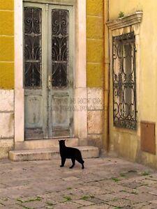 Photography-Black-Cat-Contrast-Yellow-Brick-Old-Door-Canvas-Print