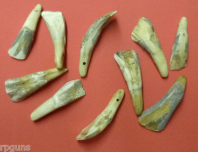 100 ANTIQUED BUFFALO TEETH Taxidermy Animal Mount Display GREAT FOR JEWELRY Art