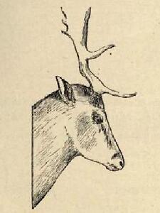 Taxidermy-1901-book-on-CD-bird-fish-animal