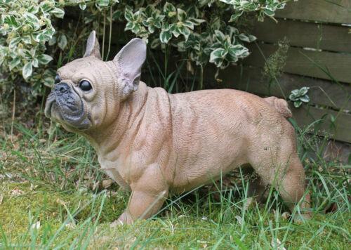 "Dekofigur Cane Bulldog Francese francese /""Alain/"" animale personaggio SCULTURA CANE CASA"