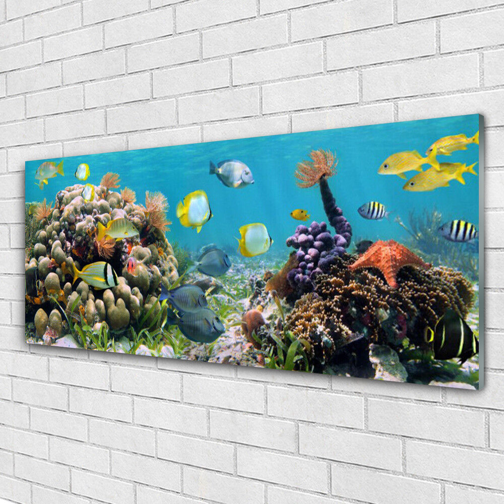 Tableau murale Impression sous verre 125x50 Nature Récif De Corail