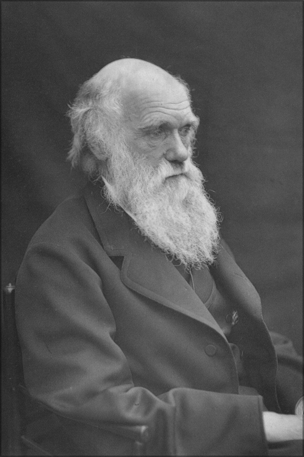Plakat, Viele Größen; Sir Charles Darwin 1874