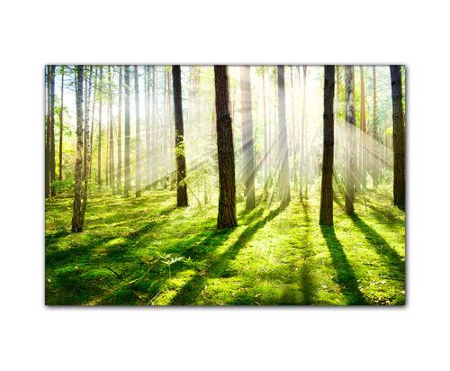 kein bohren nötig bespannt auf Holzkeilrahmen Leinwandbild Wald im Sommer