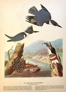 "Vtg 1970/'s Audubon Bird Art Print Color Litho HUMMINGBIRD 9/"" x 12/"" SEE VARIETY"