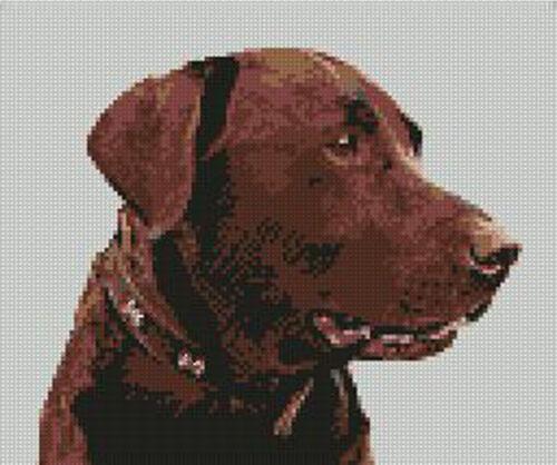 "Chocolate Labrador Cross Stitch Kit 9/"" x 7.5/"" D2141"