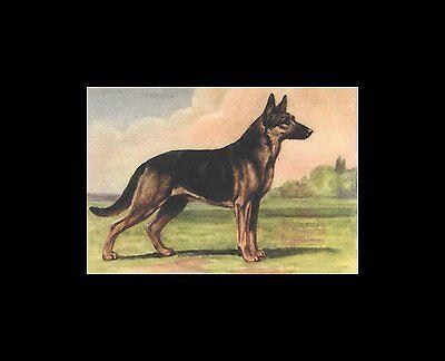 Dog Art Print German Shepherd Megargee MATTED