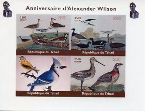 Chad-2018-Gomma-integra-non-linguellato-Alexander-WILSON-ornitologo-4v-IMPF-M-S-birds-stamps