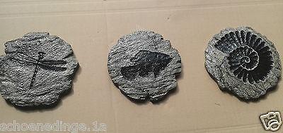 Libelle Fisch Schnecke granit marmoriert Trittstein Trittplatte 3 TRITTSTEINE