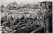 PFERDE an der TRÄNKE im UNTERSTAND  - Alois KOLB Original  Lithographie 1917