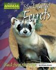 Black-Footed Ferrets: Back from the Brink by Miriam Aronin (Hardback, 2007)