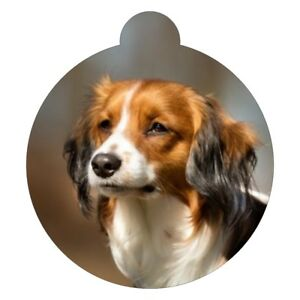 Kooikerhondje Hunderasse Bild Haustier Hundemarke Ebay